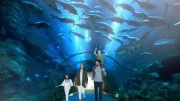 Dubai_Aquarium___Underwater_Zoo